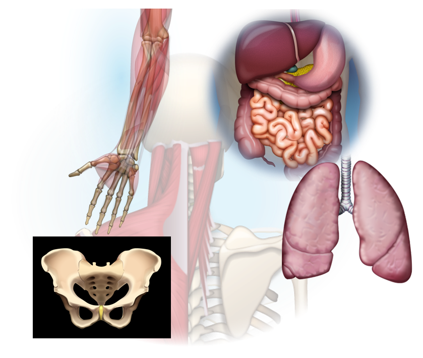 medical-illustrations